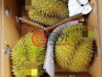 马来西亚彭亨劳伯的土地,Raub,编号54237005