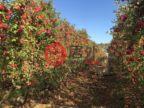 澳大利亚维多利亚州Toolamba West的土地,编号49776667